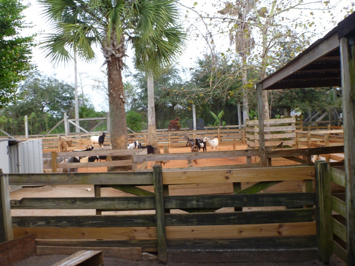 Visiting Gatorland in Florida, Orlando