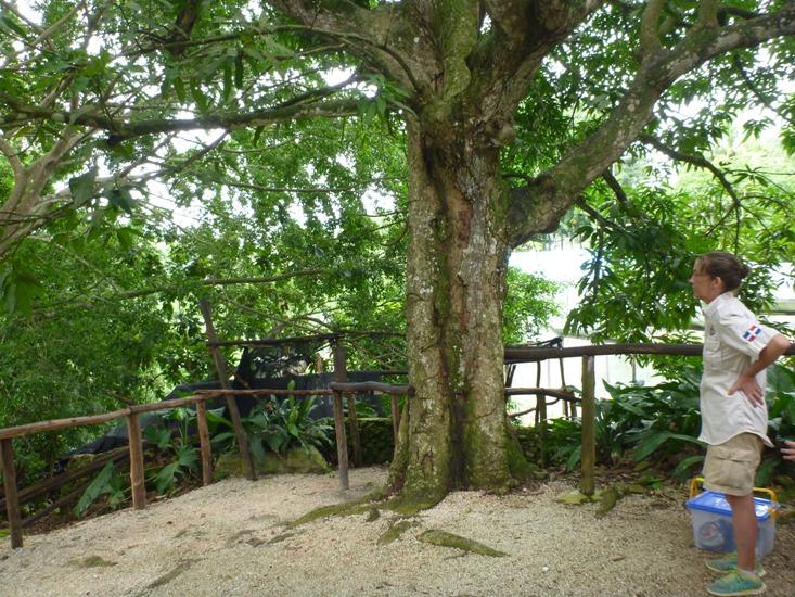 Owner of Monkeyland Punta Cana