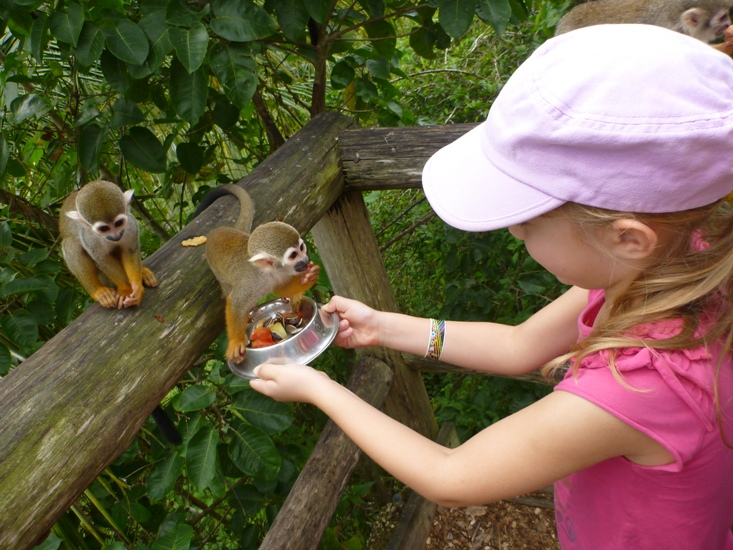 Feeding squirrel monkeys at Monkeyland Punta Cana