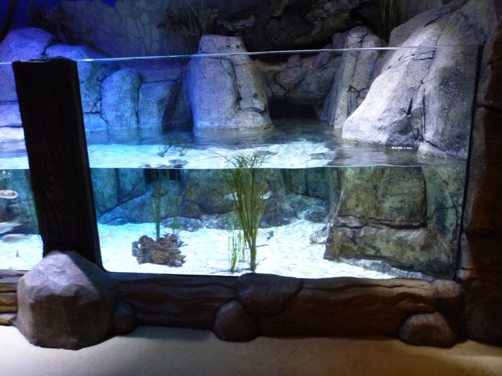 Exhibit at Sea Life Aquarium, Charlotte-Concord, North Carolina